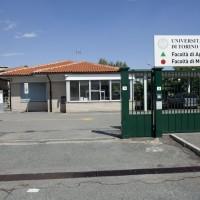 Manutenzione straordinaria Facoltà di Agraria e Veterinaria Università di Torino